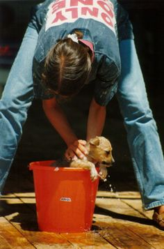 How to Keep Your Dog Smelling Clean in Between Baths! So simple, why didn't I think of that!?!?