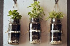 Grow the herbs I use in mason jars! Cute and useful! Just label the jars :D