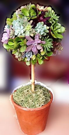 Succulent Topiary Centerpiece Traditional Modern Unique Wedding Event or Home Decor. $115.00, via Etsy.
