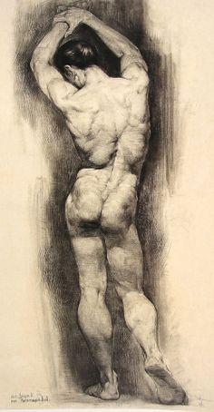 anatomy ref