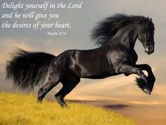 if there is one thing I am sure of ...God works through horses....:)