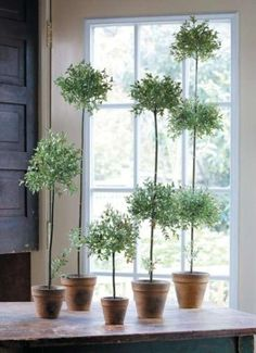 ♕ {topiary in the kitchen}