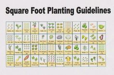 How much of each vegetable to plant per square foot.