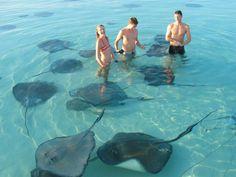 The Sand Bar - North Sound, Grand Cayman