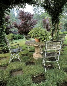 Country garden, vine-covered pergola and rustic furniture