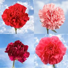 Valentines Day Carnations! Sell them at lunch time for a fundraising idea!