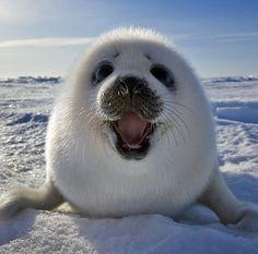 Smiling seal :)