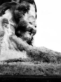 eroded lion