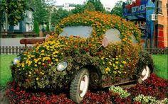 Flowering Volkswagen Beetle
