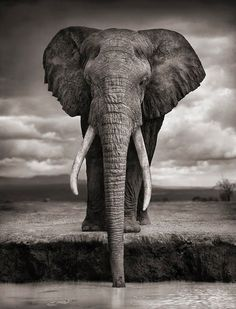 African beauty by Nick Brandt