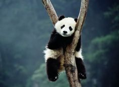 funny animals, bear, animal pictures, animal funnies, panda, sleeping animals, pet photos, cutest animals, wild at heart