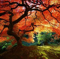 love trees - wow orang, autumn, color, japanese beauty, japanese gardens, fall trees, amazing nature, place, portland oregon
