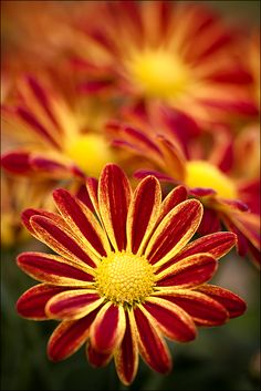 gorgeous red and yellow