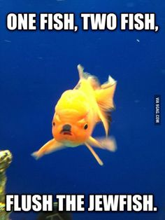 One Fish, Two Fish...