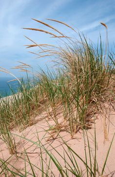 Sleeping Bear Dunes- the largest living (moving) sand dunes in North America.  Gorgeous views of Lake Michigan.