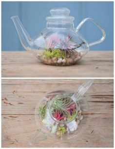 """I love love love this """"Clear Teapot""""!!   It would be pretty in the kitchen or diningroom   Green Tea Terrarium   DIY"""