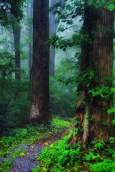 forest path, Blue Ridge Mountains