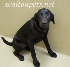 Walton County, GA Shelter Dog Needs a Family - Please Foster/Share if you Cannot Adopt - This is a kill shelter These animals are always Urgent