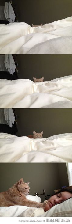 How cat people wake up…