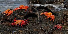 The Traveller's Guide to Wildlife in the Galapagos Islands