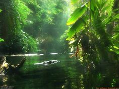 The Amazon - A Green