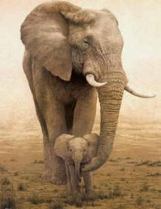 Elephants mother and child