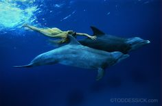 Swimming with Dolphins - learn about where to swim with them, a GoddessLife Swimming with Dolphins retreat, Read a guide about swimming with Dolphins - including proper etiquette and games to play with them, how to save them or get a degree in Marine Mammal Science.