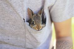 pocket sized bunny