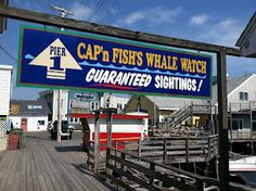 Cap'n Fish guarantees sighting of a Whale.  we wondered if he had a personal supply of whales to use for sighting for tourists?