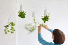 kitchen windows, kitchen herbs, herbs garden, ceramics, ceilings, kitchen sinks, sky planter, hanging planters, hanging gardens