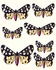 Butterfly And Winged Beauty Art