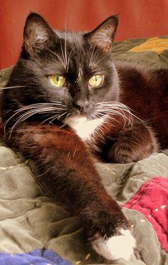 Cat On Velvet