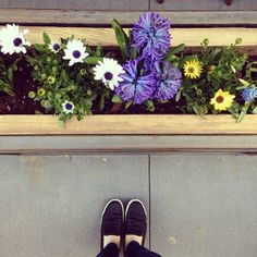 Our King Sneakers look even better alongside the colorful spring flowers.