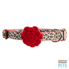 Martha Stewart Pets™ Safari Adjustable Collar