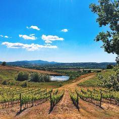 Vineyard view in #Tuscany. Photo courtesy of shwidjaja on Instagram.