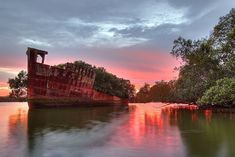 102 year old abandoned ship is a floating forest.