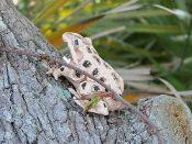 EVIL Frog - at my friend's website:  http://shop.creativelyevil.com/