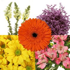 FiftyFlowers.com - Assorted Farm Mix Combo Pack
