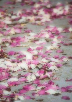 A SPRING stroll down Magnolia Lane...where will the petals lead?