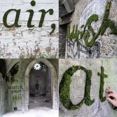 Learn how to make moss graffiti!