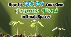 In her book The Edible Balcony, Alex Mitchell details how to grow fresh produce, such as sprouts, in small spaces. http://articles.mercola.com/sites/articles/archive/2013/05/23/edible-garden.aspx