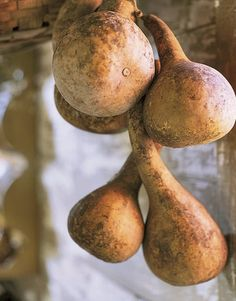 Dried gourds tied together in a grouping would make a gorgeous decoration for your front door or wall.