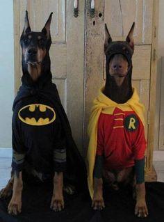 anim, hero, dogs, halloween costumes, pet, dog costumes, robins, batman, dobermans