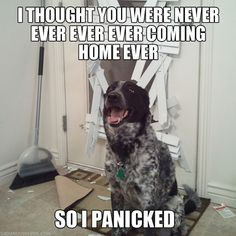 Poor doggies...wonder if ours think this every time we walk out the door...