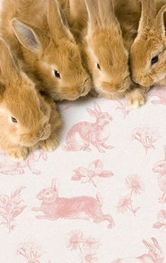 Bunnies anim, rabbits, pets, baby bunnies, french country, pink, toile de jouy, easter bunny, friend