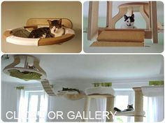 cats, amaz cat, cat furniture, anim, idea, cat climb, pet, cat wall climb, ceilings