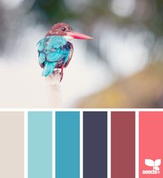 Feathered Palette - http://design-seeds.com/index.php/home/entry/feathered-palette1