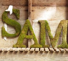 Live Moss Letters | Pottery Barn - $79.00