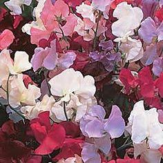 renes flowers denver