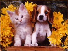kittens and puppies - Google Search